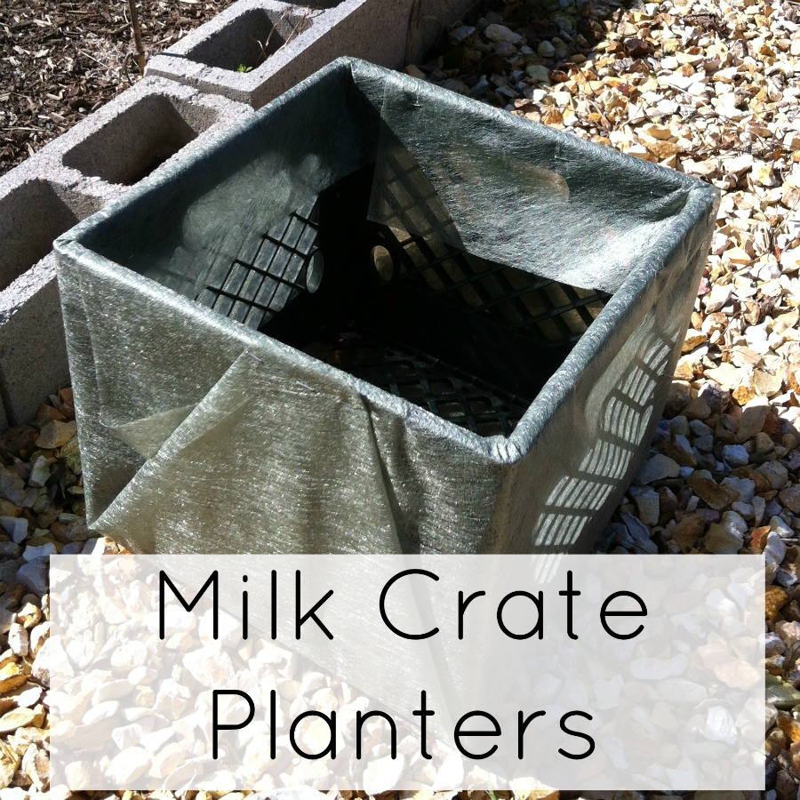 How to grow veggies in a milk crate!