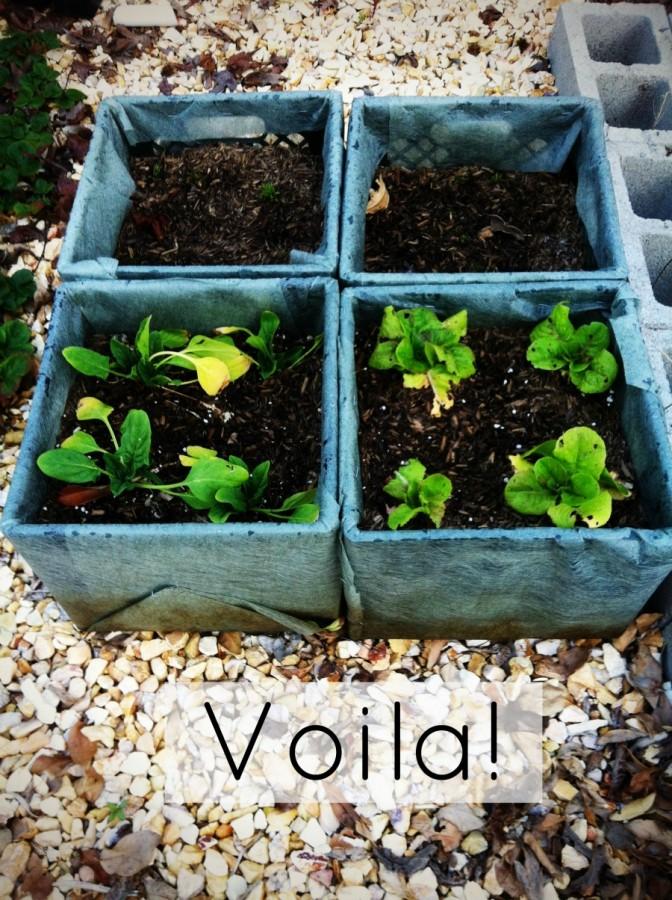 milk crate planters with plants - Milk Crate Garden