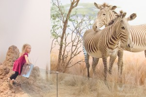Summertime in the Bay Area : Things to do with Kids : California Academy of Sciences