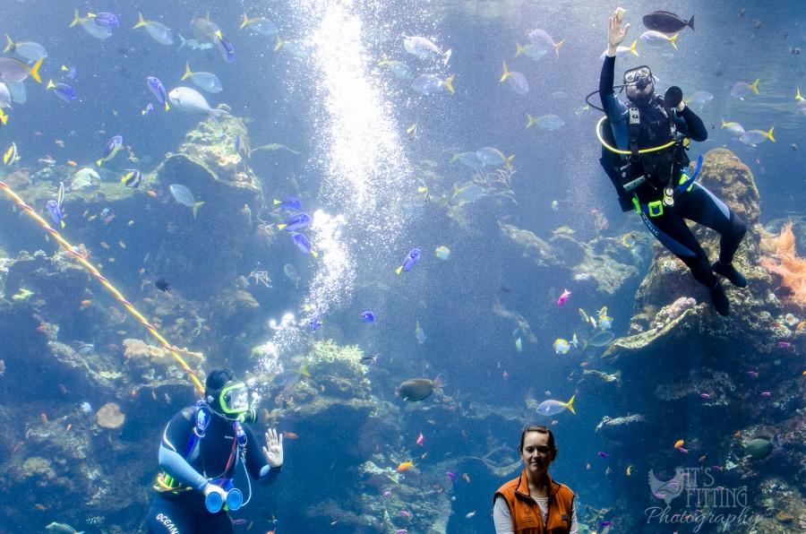 california-academy-sciences-aquarium