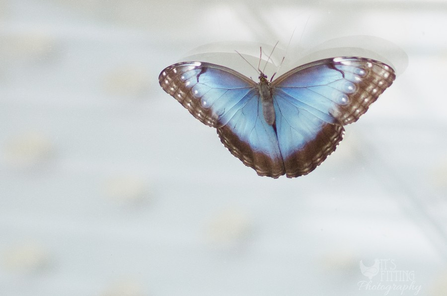california-academy-sciences-butterfly-rainforest
