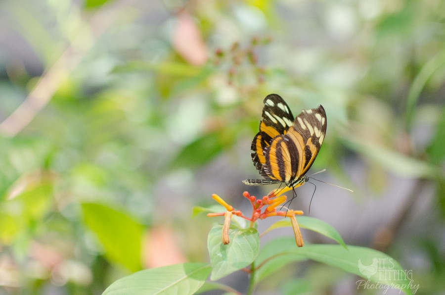 CA-academy-sciences-butterfly