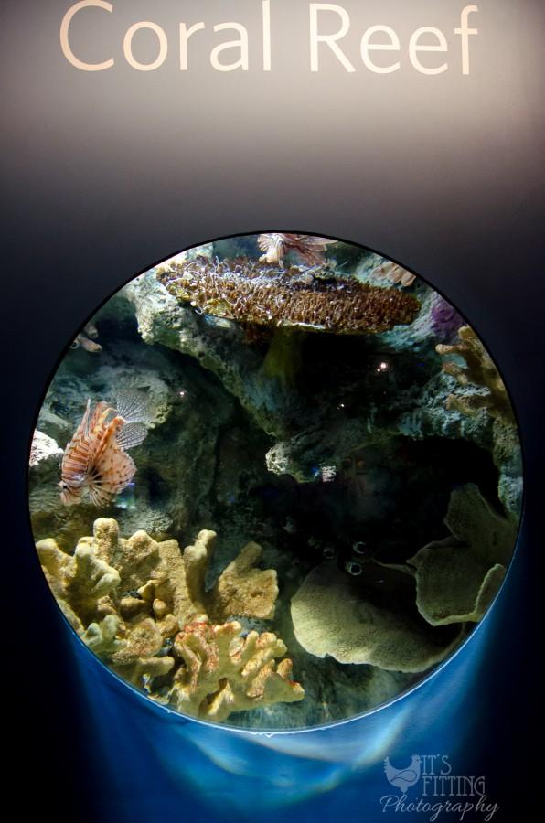 california-academy-of-sciences-aquarium