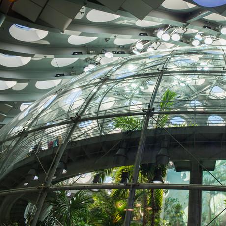 rainforest_dome_1x1_2-1844