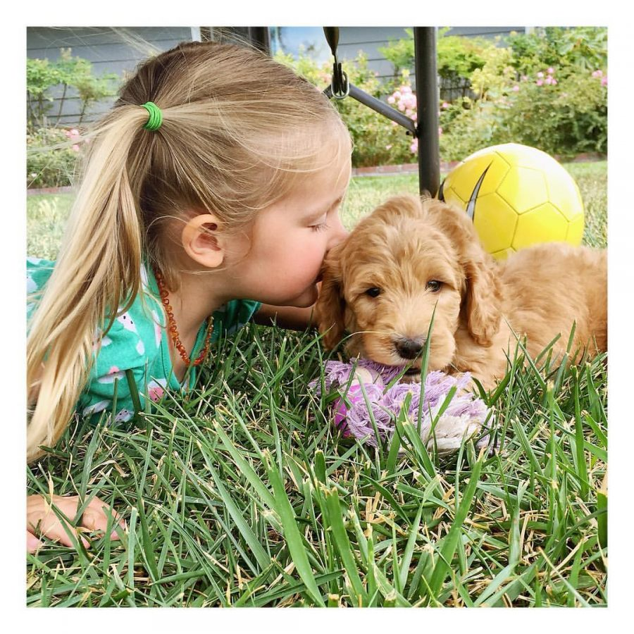 new-puppy-tips-for-success