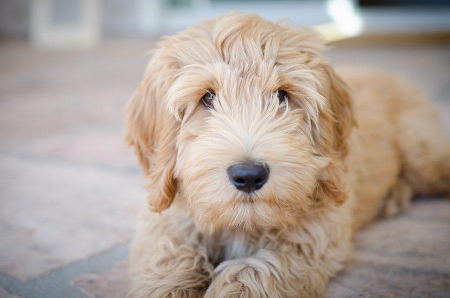 new-puppy-Natural-Balance-dog-food
